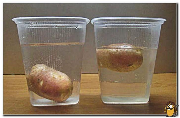 картофель замочить в инсектициде