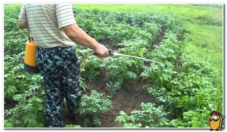 опрыскиватель для картофеля