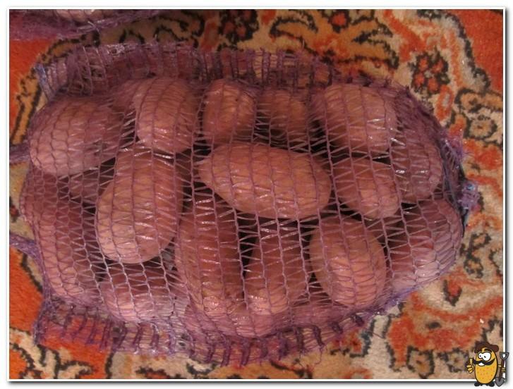хранение картофеля родриго