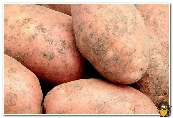 картофель лапоть