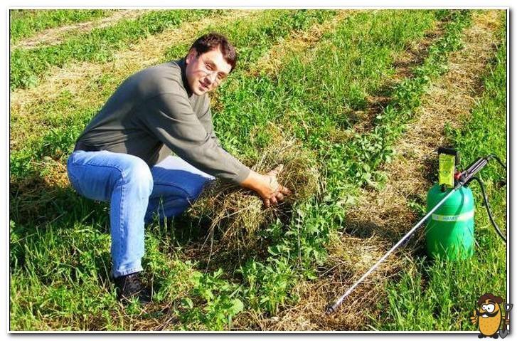 мульча из травы