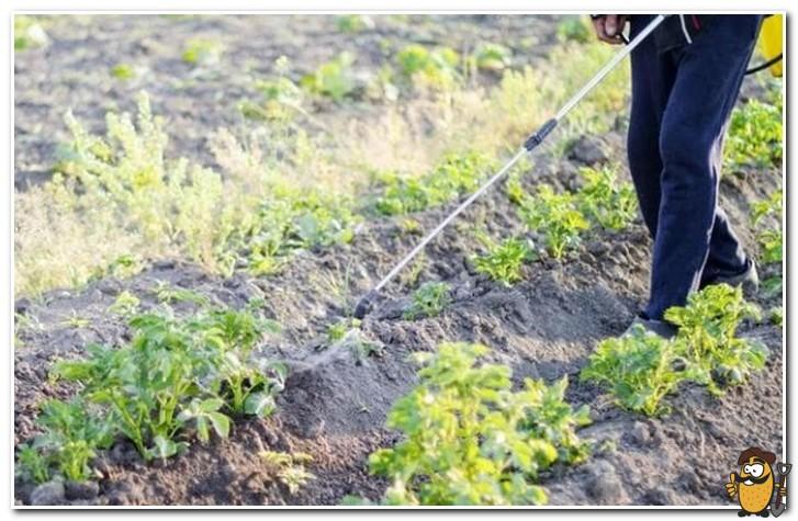 обработка почвы от проволочника