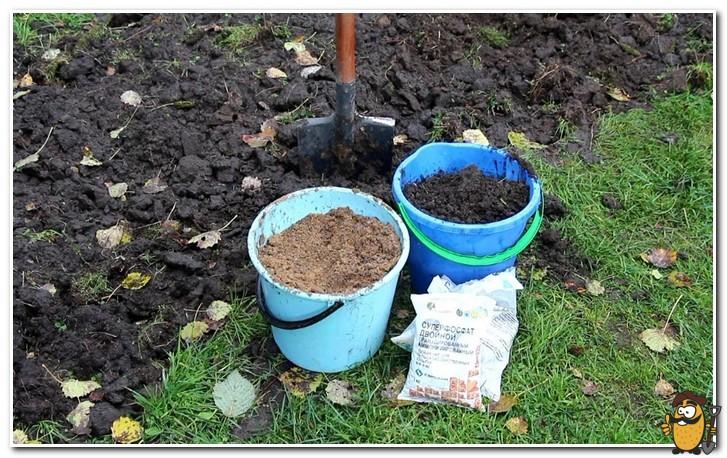 добавление удобрений в почву осенью
