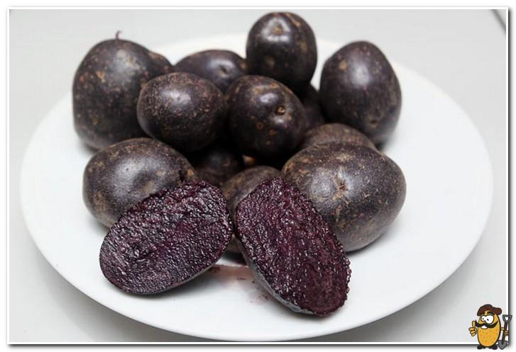 черный картофель