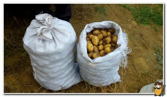 закрытые мешки с картошкой