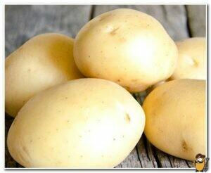 kartofel-lider