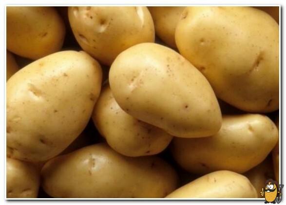 клубни картофеля янка