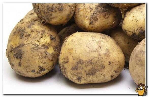 сорт картофеля лидер