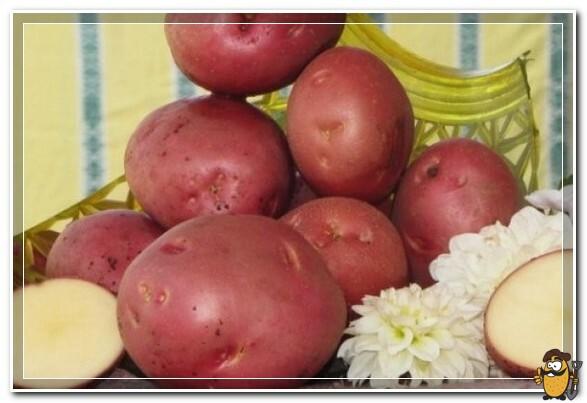 картошка алладин