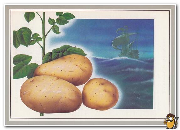 картофель история