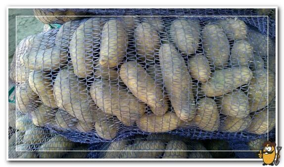 хранение картофеля гранада