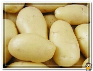 kartofel-granada