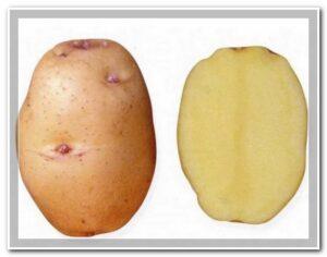 картошка барин