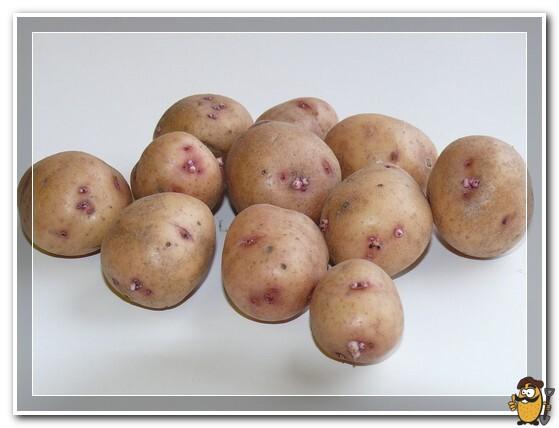 kartofel-avrora