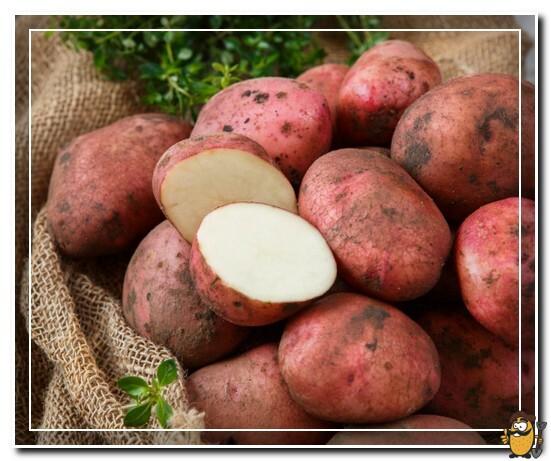 картошка фаворит