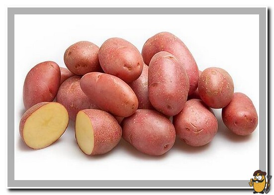 сорт картофеля фаворит