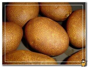 kartofel-kivi